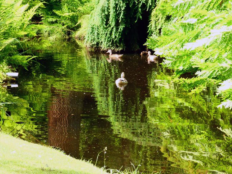Spiegelend water -