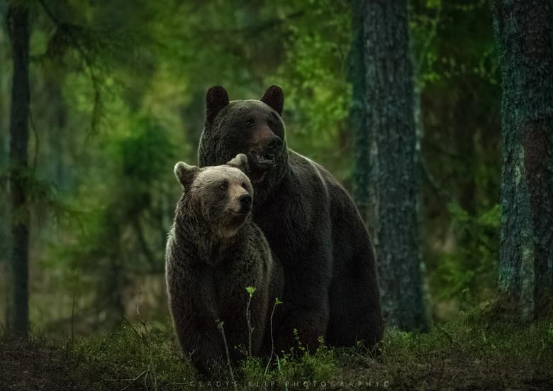 Ik zag twee beren..