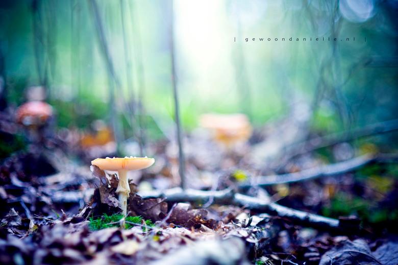 Come & sit. - Nog een paddestoeltje uit het prachtige Heerdense bos. Hoop dat ik dit weekend nog even de gelegenheid krijg om met camera de natuur
