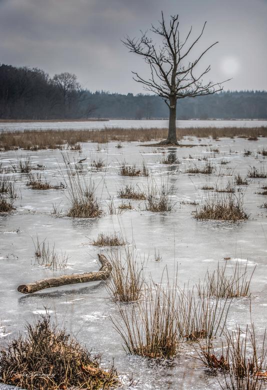Winter sighs - Een mooi zonsopkomst zat er helaas niet in. Maar het was wel bijzonder om de plassen zo dicht gevroren te zien. De kou viel gelukkig me