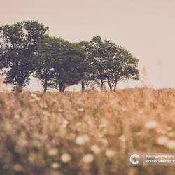 The dutch prairie