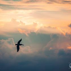 Magische vlucht