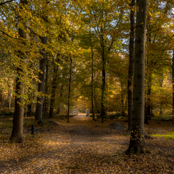 Herfst in Schutterspark