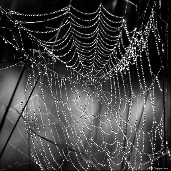 web met mistdruppels -