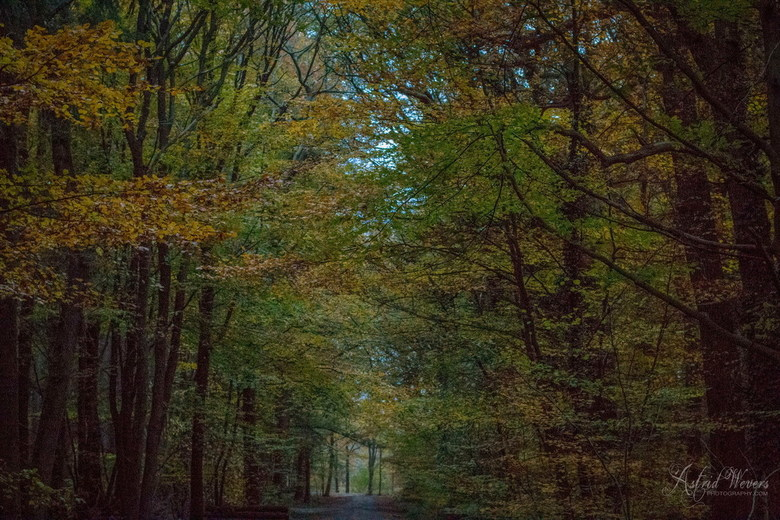 Herfst 7 november 2018 07 - I love to walk in the forest for hours. Dreaming away with the sound of the waving trees. Smell the seasons and enjoy all