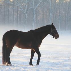 Paard in sneeuw en nevel