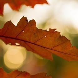 door de bladeren het ...!