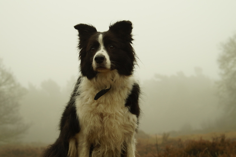 Portret Rusty -