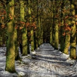 Beetje winters in het bos.