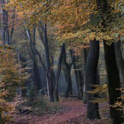 Diep in het bos