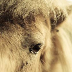 Pony op de veluwe