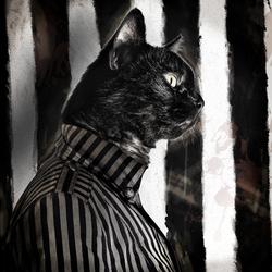 kat in stijl