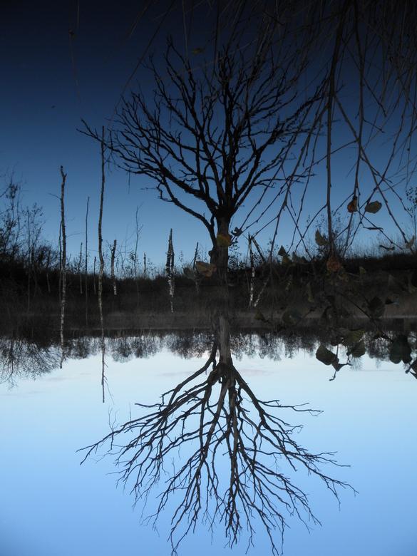 Weerspiegeling - In Drenthe gemaakt bij een ondergelopen bos.<br /> Ik weet niet meer precies waar......