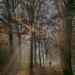 Early forestwalk