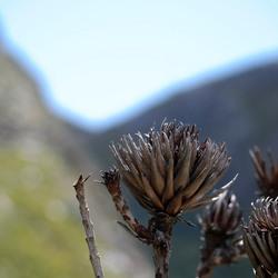 Verbrand fynbos