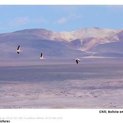 Flamingo's boven Bolivia