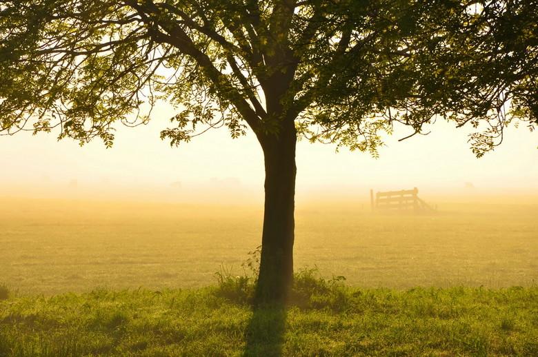 Morning Tree - Dauw op de weilanden in de vroege ochtend om 06:45 uur in de buurt van Alphen aan den Rijn