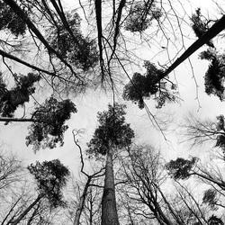 Bomen door een fisheyelens