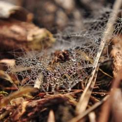 Spinnenwebje met dauw