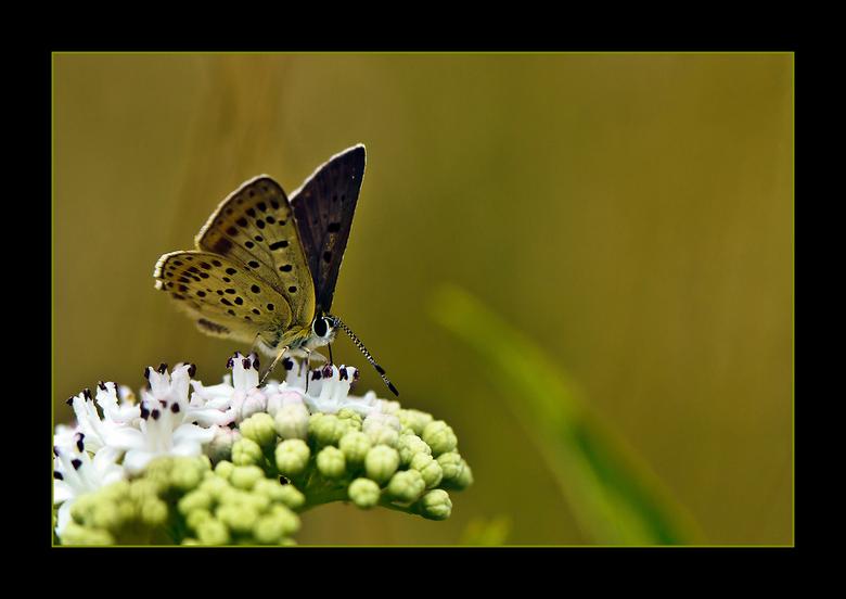 vlinder - weet niet welke het is.