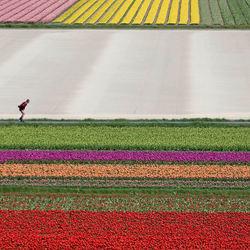 skeeleren tussen de bloemen