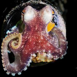Octopus in de fles