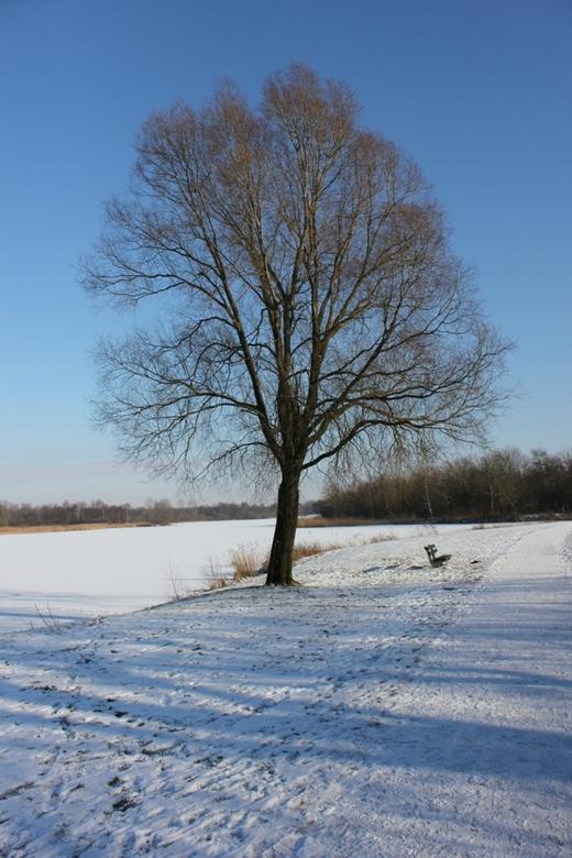 koele winterlucht - Deze foto is afgelopen winter gemaakt. Prachtige koude lucht maakt de foto extra koud en fris.