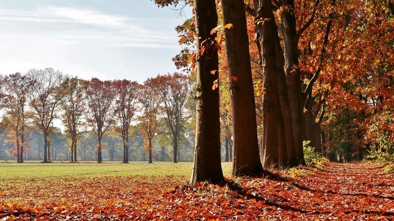 Herfstsfeertje 2