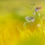 twee mooie vlindertjes..