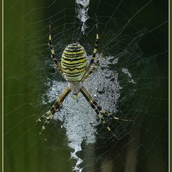 Web van kristal