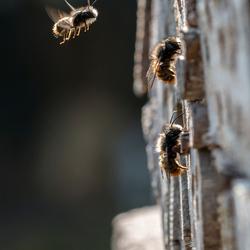 de bezige bijtjes