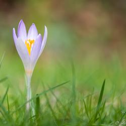 De lentebode