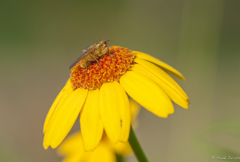 On top of a flower -