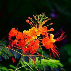 Natuur in Curaçao