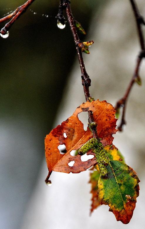 Voor Rob 1951 . . .  -  . .. . voor jullie samen Rob.<br /> <br /> er waait een blad van de boom<br /> van de vele bladeren maar één. <br /> Dat e