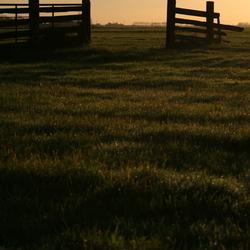 Meeuw met zonsopgang