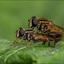 Einde van het insecten seizoen nadert.