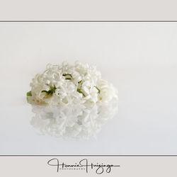 Hyacinten  ( high key)
