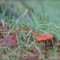 Januari paddenstoel