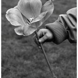 a flower from a child's hand