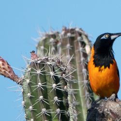 Aruba Vogels