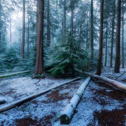 Lijnen in de sneeuw