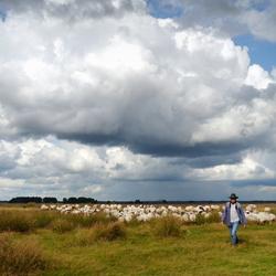 en daar komt de kudde met herder...