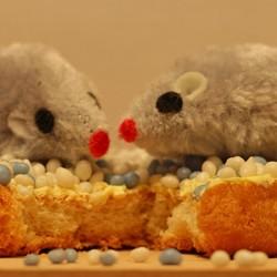 beschuit met muisjes (3201)