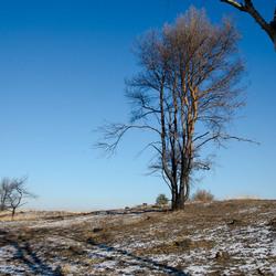 Winterlandschap Kalmthoutse heide
