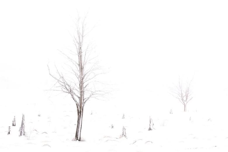 WinterindeHogeVenen  - Eenzame boom in een winters landschap