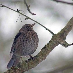 vogels in de tuin 1