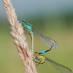 Blue & Green ...