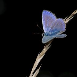 blauw blauw