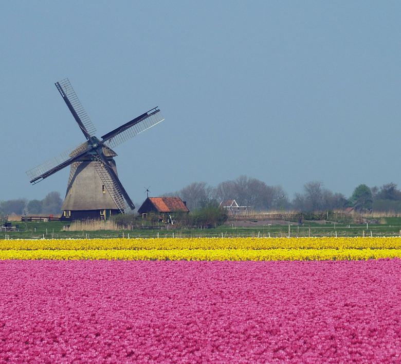 Kleurrijk - Een typisch hollands plaatje, gefotografeerd in Noord Holland.